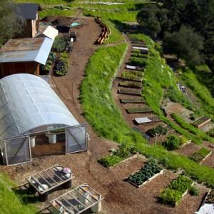 Farm-Garden-At-The-Homestead