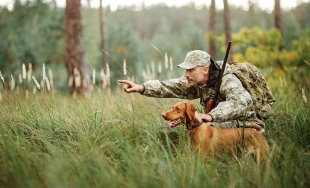 Hunting Dog Training: 7 Tips for Success