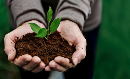 The Top 4 Pillars of Sustainable Agriculture That Have Revolutionized it in a Big Way