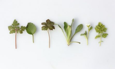 8 Amusing Herbs To Try For Mood Swings